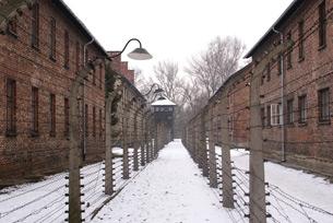 image for Día Internacional de Conmemoración de las Víctimas del Holocausto