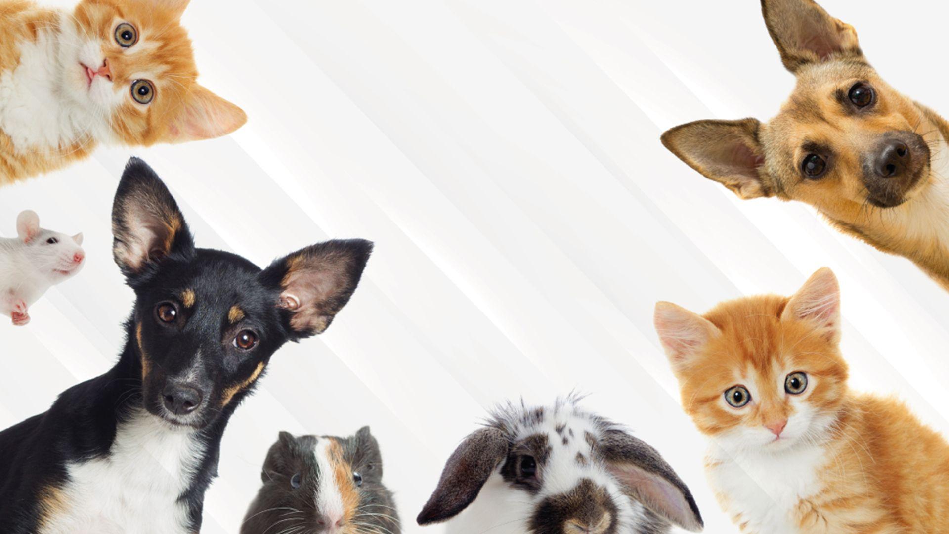 image for Día Internacional de los Derechos de los Animales