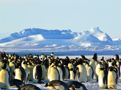 image for Día de Concienciación por los Pingüinos