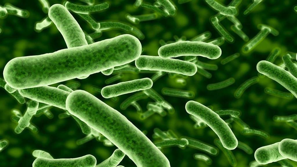 image for Bacteria que explota activamente  para sobrevivir