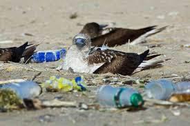 image for Piden a Minsalud no recomendar plásticos de un solo uso