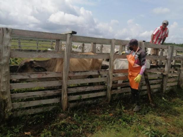 image for Inmunizados bovinos y bufalinos contra la fiebre aftosa