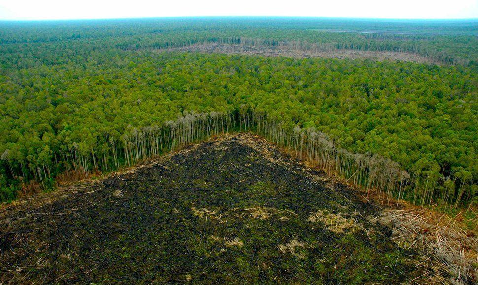 image for Comercio ilícito de madera es el más lucrativo del mundo