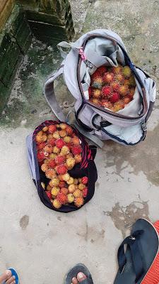 image for Garoto é morto quando colhia frutos em um sitio