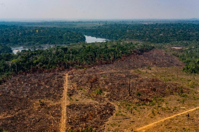 image for Desmatamento na Amazônia em junho é o maior em 5 anos