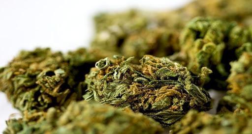 image for Incautan marihuana en registros de aeropuerto