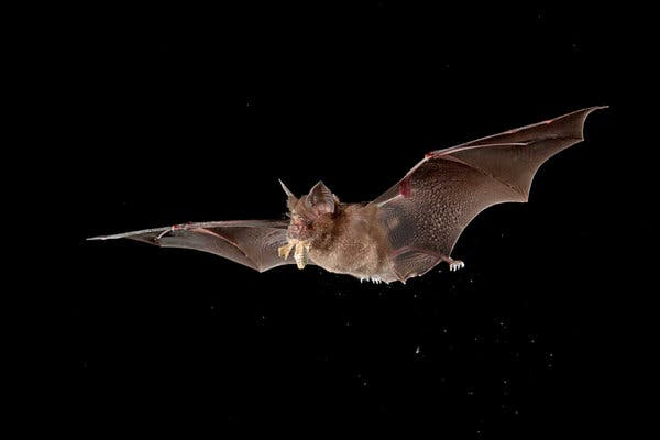 image for Queman murciélagos por temor al coronavirus