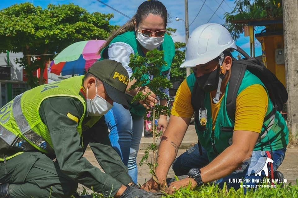 image for Día mundial del árbol | Reforestación de árboles frutales