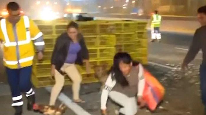 image for Camión con gallinas se vuelca y vecinos aprovechan el caos