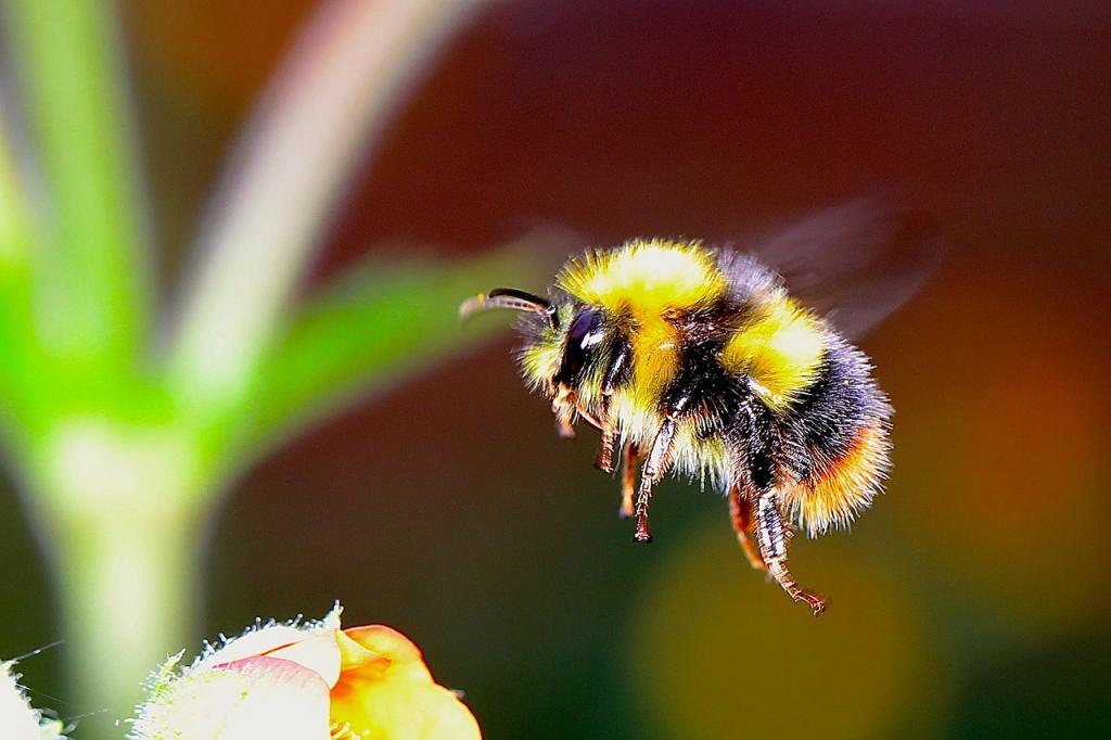 image for Científicos encuentran similitudes entre la actividad cerebral de las abejas y los humanos