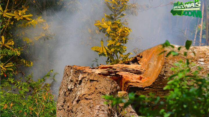 image for Ministério confirma recursos para combate a desmatamento na Amazônia
