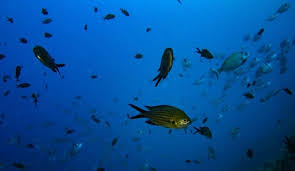 image for Oxígeno del océano disminuyó  un 2 por ciento entre 1960 y 2010