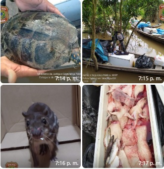 image for Polícia federal apreende cerca de 300kg de carne de caça, armas e munições