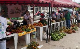 image for Prefeitura  realiza a Feira da Agricultura Familiar