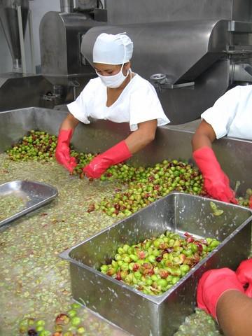 image for Exportaciones de camu camu alcanzaron récord en 2020