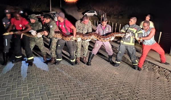 image for Cobra de sete metros é encontrada em represa frequentada
