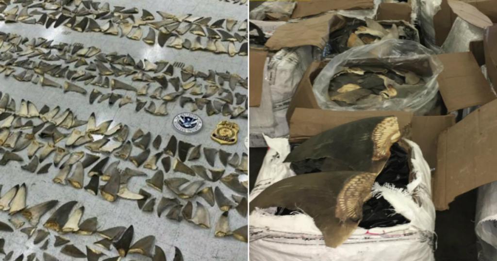 image for Aletas de tiburón en puerto de Miami son decomisadas
