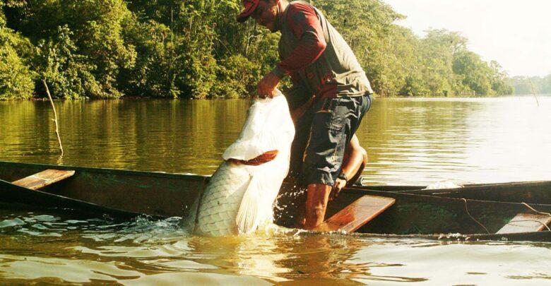 image for Assistência técnica do Idam fortalece pesca manejada do pirarucu
