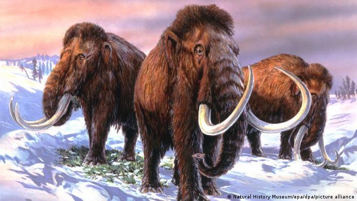 image for Bioscience company claims it will bring back the extinct woolly mammoth