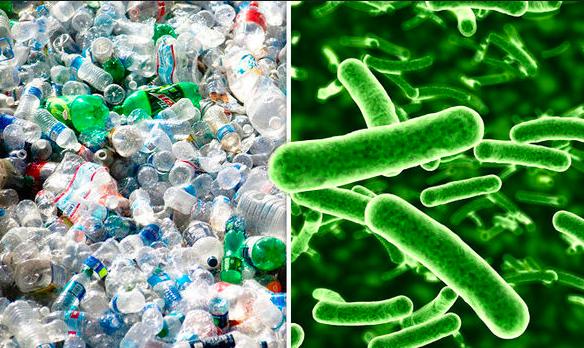 image for Bacteria que come plástico puede ser la clave del reciclaje