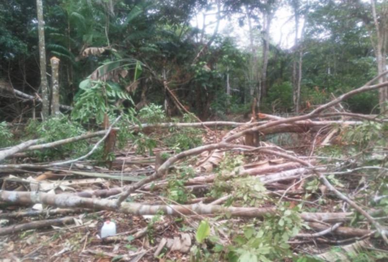 image for Policía ambiental realiza control a la tala ilegal