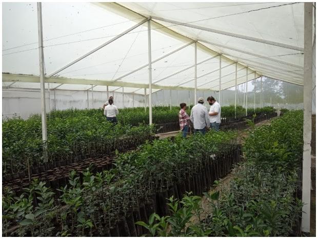 image for ICA entrega Casa Malla a vivero productor de cítricos en Risaralda