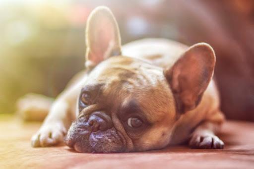 image for Mascotas son abandonadas por temor a contagio de coronavirus