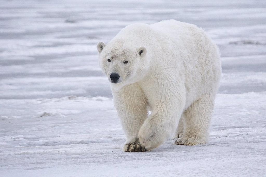 image for Animales en peligro de extinción