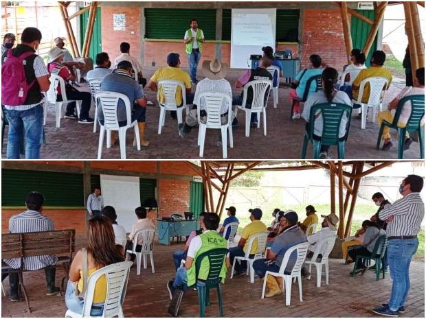 image for Aroma y condición fitosanitaria del café en Oiba