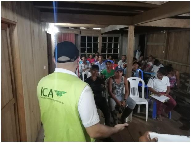 image for Comunidades indígenas del Amazonas llega el programa nacional de fiebre aftosa