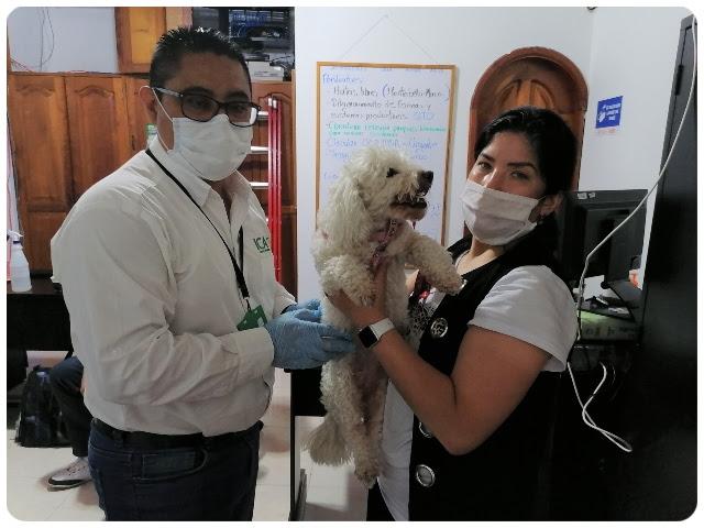 image for ICA realiza control durante la salida e ingreso de mascotas a Colombia