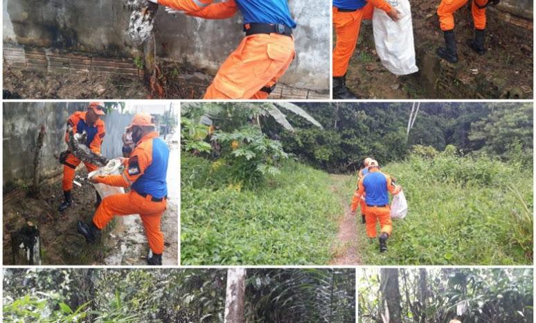 image for Defesa Civil faz captura de animal silvestre em área urbana