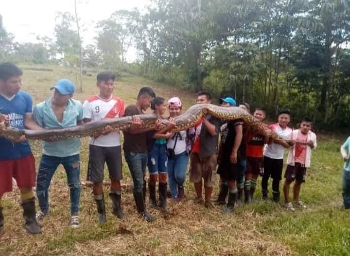 image for Matan anaconda en la comunidad de flor de coco