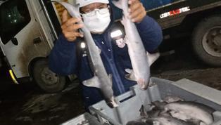 image for Incautan 230 kilos de tiburón martillo
