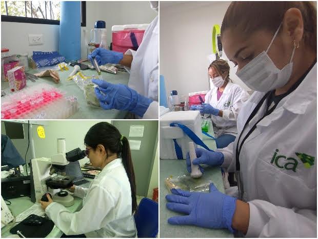image for Diagnóstico Fitosanitario de Palmira analizó 3207 muestras de moscas de la fruta