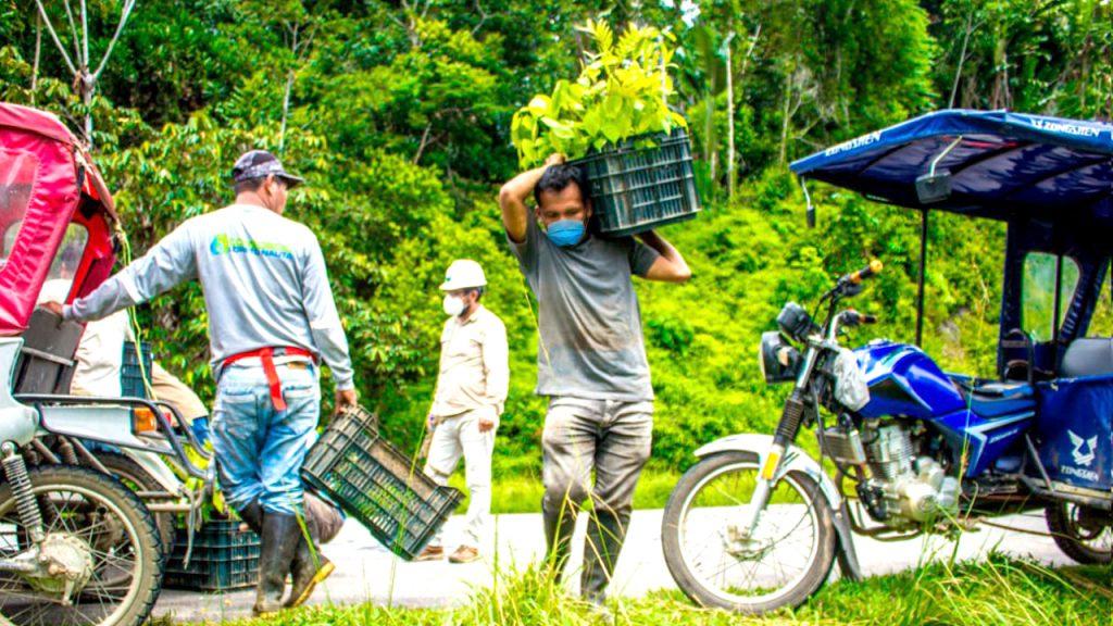 image for Reforestación carretera Iquitos – Nauta continúa recuperando zonas degradadas