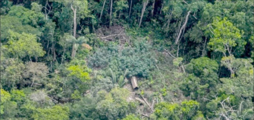 image for Existencia de pueblos no contactados en la Reserva Indígena Napo Tigre