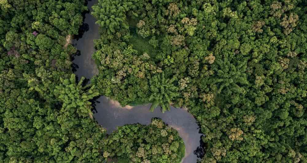 image for Amazonía visible /  Acciones para su conservación y desarrollo