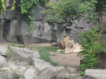 image for Zoológico en Berlín rechaza matanza de animales por economía ante COVID-19