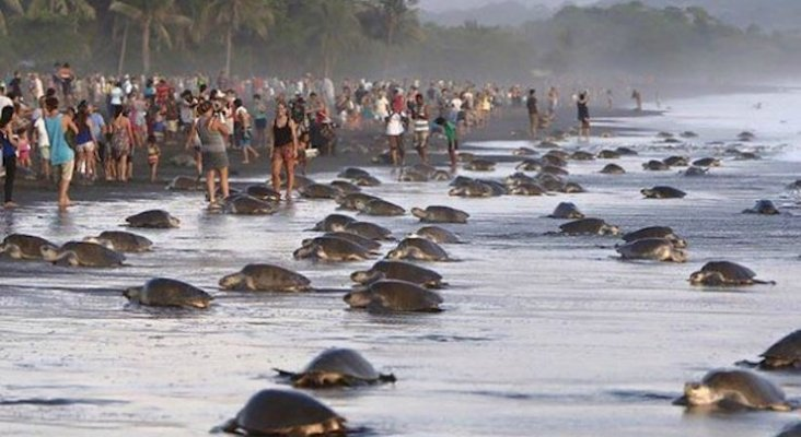 image for Turismo no permite que las tortugas aniden / Costa Rica