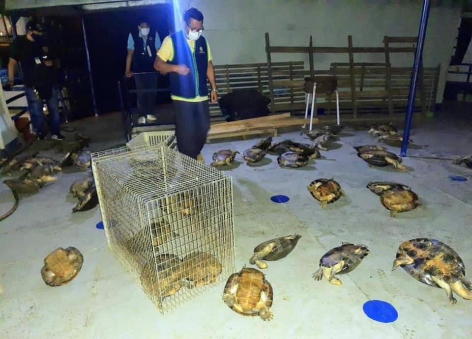 image for Operativo conjunto dio golpe al tráfico ilegal de fauna silvestre