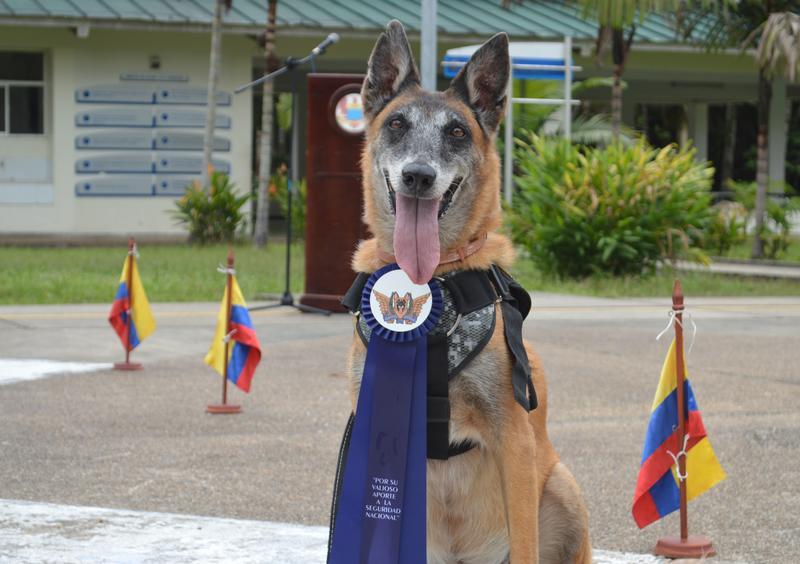 Tras once años de servicio a la Nación, canino antiexplosivo fue despedida con honores por su Fuerza Aérea