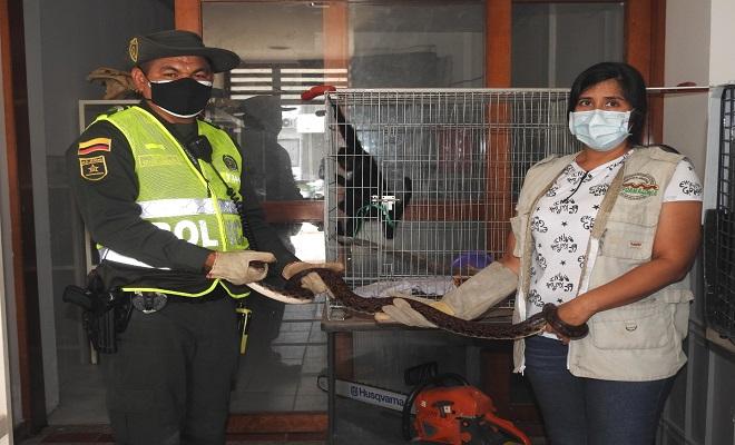 RESCATAMOS ESPECIES VIVAS  EN VÍA PÚBLICA, EN EL  BARRIO JOSÉ MARÍA HERNÁNDEZ Y DEL SECTOR DE LOS KILÓMETROS