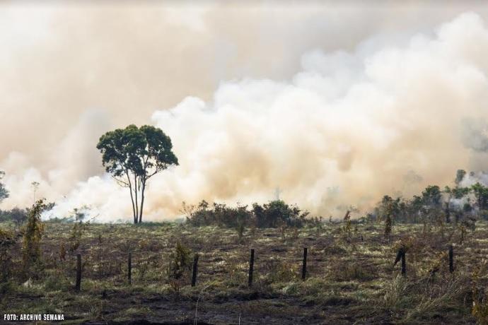 Bosques quemandose