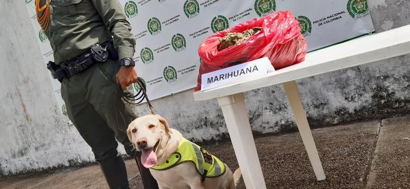 POLICÍA EN LETICIA INCAUTA 4.5 KILOS DE MARIHUANA EN EL AEROPUERTO ALFREDO VÁSQUEZ COBO