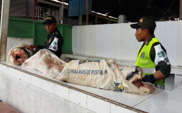 Incautado Pirarucu en la plaza de mercado