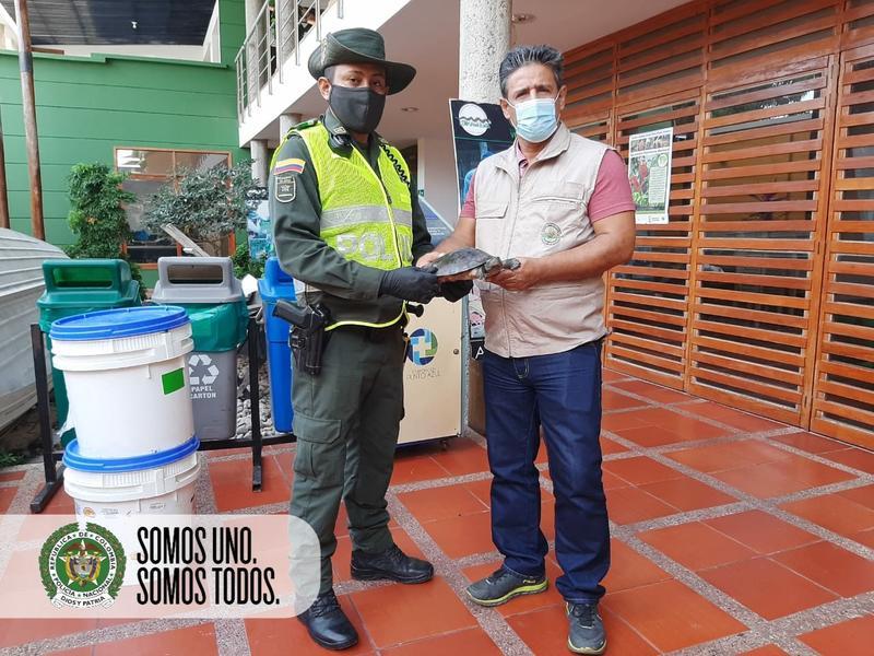 SEGUIMOS RESCATANDO LA FAUNA SILVESTRE DEL TRÁFICO DE ESPECIES EN EL AMAZONAS