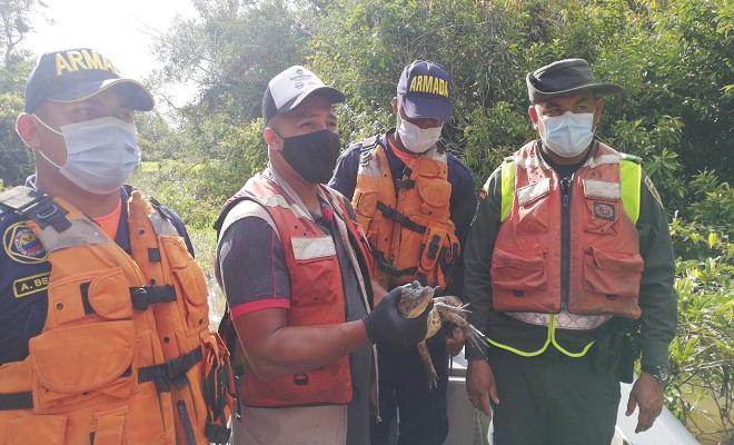LIBERAMOS ESPECIES VIVAS  A SU HÁBITAT NATURAL EN LA SELVA AMAZÓNICA