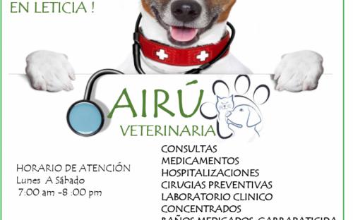 Imagen de un perro con indicaciones de servicios veterinarios