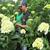 El ICA, soporte para la exportación de flores y ornamentales al mundo para San Valentín